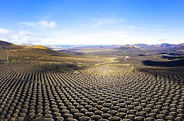 Wine-growing area La Geria, near Yaiza, drone shot, Lanzarote, Canary Islands, Spain, Europe