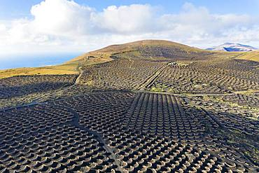Vineyard La Geria, mountain Tinasoria, near Yaiza, drone shot, Lanzarote, Canary Islands, Spain, Europe