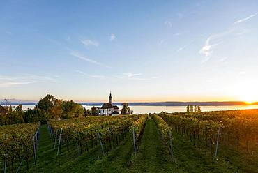Pilgrimage church Birnau with vineyards in autumn, evening light, Uhldingen-Muehlhofen, Lake Constance, Baden-Wuerttemberg, Germany, Europe