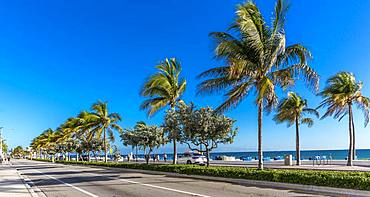 Palms and Beach, Fort Lauderdale Beach Boulevard, Fort Lauderdale, Broward County, Florida, USA, North America