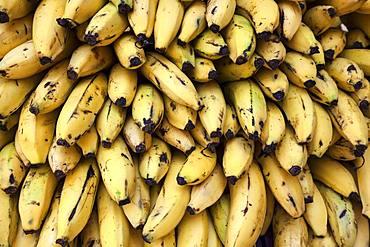 Bananas (Musa), Province of San Jose, Costa Rica, Central America