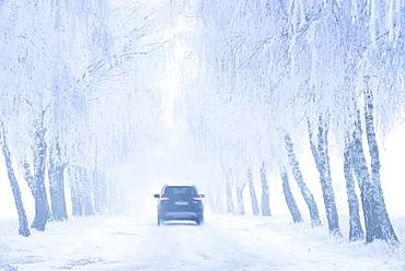 Car driving on snow-covered road through Birken-Allee with hoarfrost and fog, Burgenlandkreis, Saxony-Anhalt, Germany, Europe
