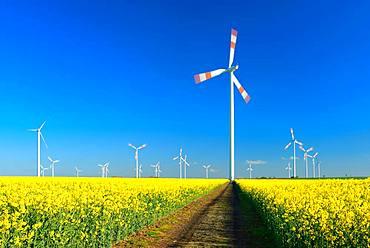 Wind turbines behind blooming rape field, blue sky, Saxony-Anhalt, Germany, Europe