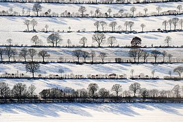 Bushes and Trees in Rows, Winter Landscape, Schleswig Holstein, Germany, Europe