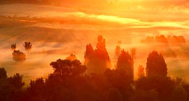 Atmospheric field landscape with trees at sunrise, fog glows orange, Unstruttal, Saxony-Anhalt, Germany, Europe