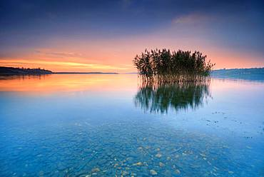 Reeds reflected in the Lake Geiseltalsee at sunrise, Saxony-Anhalt, Germany, Europe