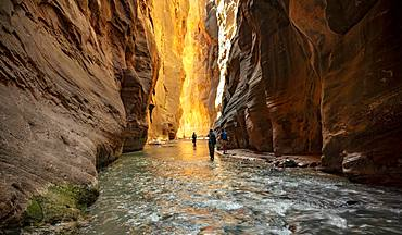 Hikers in the river, The Narrows, Virgin River bottleneck, Zion Canyon cliffs, Zion National Park, Utah, USA, North America