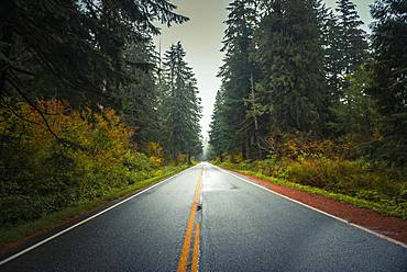 Highway through autumn forest, Mt. Baker Highway, Mount Baker-Snoqualmie National Forest, Washington, USA, North America