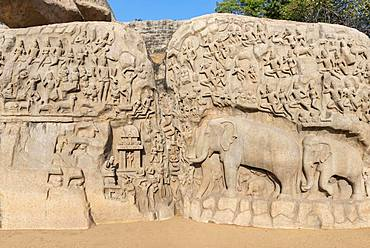 Arjuna's Penance, or Descent of the Ganges, rock relief with elephant figures and hinduism figures, Mahabalipuram, Mamallapuram, India, Asia