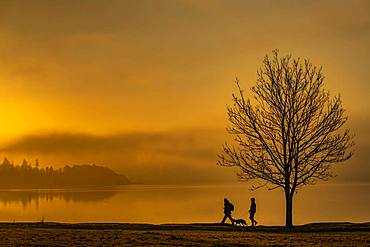 Tree with walkers on lakeshore at sunrise, Ambleside, Lake District National Park, Central England, Great Britain