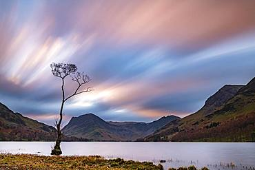 Single tree in the lake with reddish clouds, surrounded by mountains at blue hour, Buttermere Lake, Yorkshire Dales National Park, Central England, Great Britain