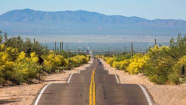 Long straight road through Sonora Desert, Tucson, Arizona, USA, North America
