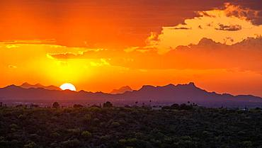 Sonora Desert at sunset, Saguaro National Park, Tucson, Arizona, USA, North America