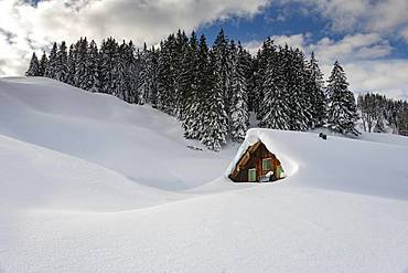 Winterly snow-covered mountain hut with forest in the background, Balderschwang, Oberallgaeu, Bavaria, Germany, Europe