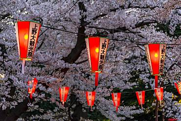 Glowing lanterns in blossoming cherry trees at Hanami Festival in spring, Ueno Park, Tokyo, Japan, Asia