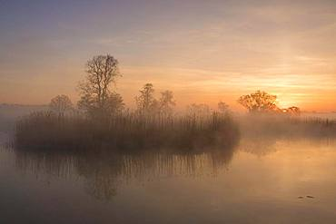 Morning atmosphere at a lake with reed banks in the Elbaue, Elbe meadows near Dessau, Middle Elbe Biosphere Reserve, Saxony-Anhalt, Germany, Europe