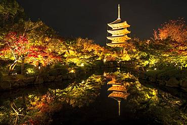 Five-storey pagoda of the Toji Temple with autumn colouring, illuminated at night, Kyoto, Japan, Asia