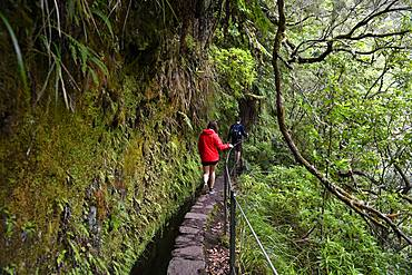 Young couple hiking on trail PR 9 Caldeirao Verde along a levada, Queimadas Rainforest, Madeira, Portugal, Europe