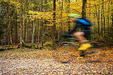 Cyclist in the autumnal forest, puller, Perlacher Forst, Munich, Upper Bavaria, Bavaria, Germany, Europe