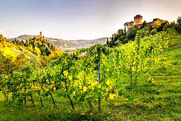 Vineyards in front of Rocca Manfrediana Fortress, on the left clock tower Torre dell'Orologio, Brisighella, Emilia-Romagna, Italy, Europe