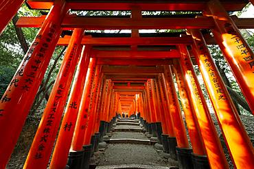 Fushimi Inari Taisha, Shinto Shrine, many traditional red Toriii gates, Fushimi Inari-taisha Okusha Hohaisho, Fushimi, Kyoto, Japan, Asia