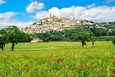 Poppy meadow in front of hill with city view, Trevi, province Perugia, Umbria, Italy, Europe