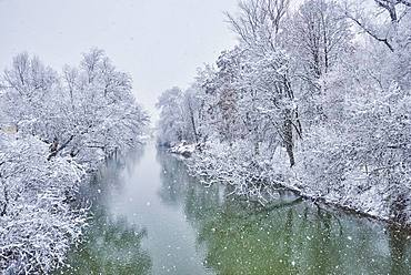 Donau with snowy trees in winter, Upper Palatinate, Bavaria, Germany, Europe