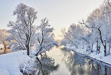 Landscape of the Donau with snowy trees in winter, Regensburg, Upper Palatinate, Bavaria, Germany, Europe