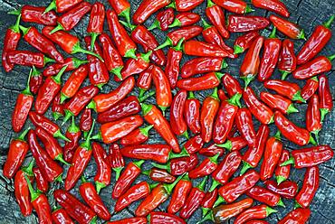 Red chilli peppers laid out to dry, Germany, Europe