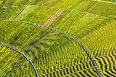 Drone shot, vineyards at Nonnenberg, Remstal near Schnait, Baden-Wuerttemberg, Germany, Europe