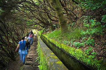 Hikers on the hiking trail PR6 to the 25 springs, along water channel, Levada das 25 Fontes, in rainforest, laurel forest Laurisilva, Rabacal nature reserve, island Madeira, Portugal, Europe