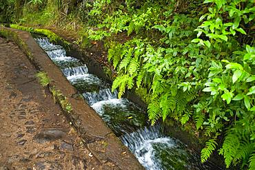 Hiking trail PR6 to the 25 springs, along water channel, Levada das 25 Fontes, in rainforest, Rabacal nature reserve, Island Madeira, Portugal, Europe