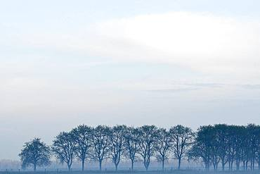 Row of trees in fog, bare trees, Lower Rhine, North Rhine-Westphalia, Germany, Europe