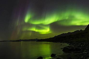 Northern Lights (Aurora borealis), near Stronstad, Lofoten, Norway, Europe