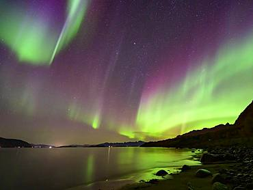 Northern Lights on the coast (Aurora borealis), Lofoten, Norway, Europe