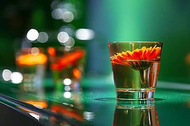 Decoration, orange blossom in glass, Duesseldorf, Germany, Europe
