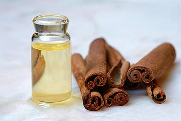 Cinnamon oil in bottle next to cinnamon bark, Germany, Europe