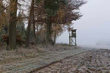 Hunter's blind at the edge of the forest in morning fog, Baden-Wuerttemberg, Germany, Europe