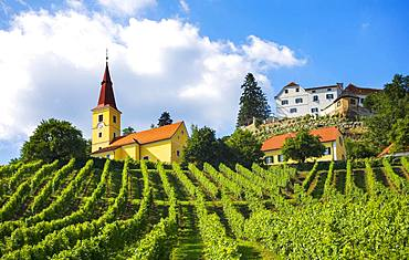 Vineyard with Kapfenstein Castle, Kapfenstein, South Styrian wine country, Styrian thermal spa country, Styria, Austria, Europe