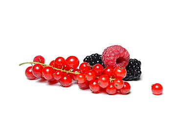 Red currants, blackberries and raspberries, Germany, Europe
