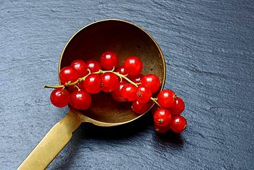 Red currants in brass ladle, Germany, Europe