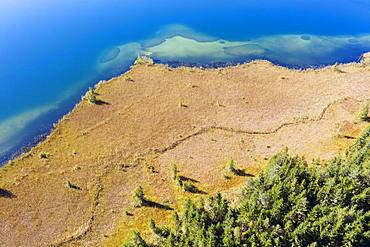 Shore area with reed belt at Lake Barmsee, near Kruen, Werdenfelser Land, drone shot, Upper Bavaria, Bavaria, Germany, Europe