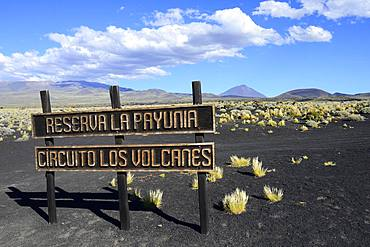 Shield Cirquito los Vulcanes, Payun Volcano in the background, Reserva La Payunia, Mendoza Province, Argentina, South America