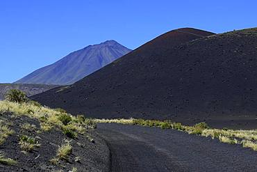 Track through volcanic lunar landscape, Payun Volcano in the background, Reserva La Payunia, Mendoza Province, Argentina, South America