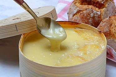 Vacherin Mont d'Or, Swiss soft cheese flows from Loeffel, Germany, Europe