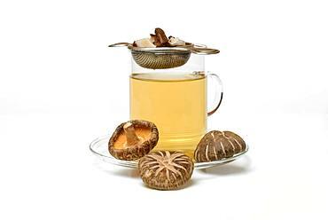Shiitake tea in tea glass with tea strainer and shiitake mushrooms, Germany, Europe