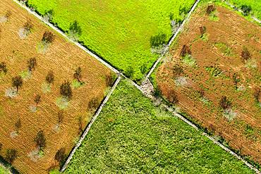 Almond plantations and meadows with stone walls, from above, near Ses Salines, Migjorn region, aerial view, Majorca, Balearic Islands, Spain, Europe