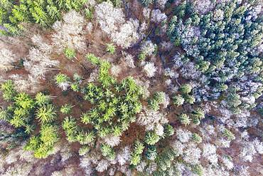 Mixed forest in winter with forest stream from above, near Icking, drone recording, Upper Bavaria, Bavaria, Germany, Europe
