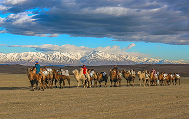 Mongolian nomads riding on camels through steppe, snowy mountain range, Khovd Province, Mongolia, Asia