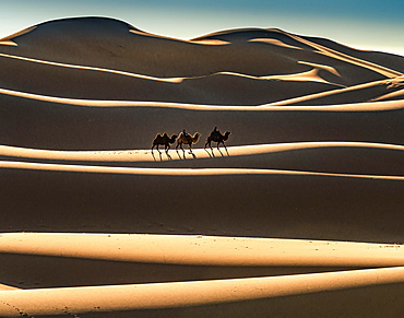 Nomads ride on Bactrian camels (Camelus bactrianus), crossing sand dune of the Gobi desert, sunrise, Oemnoe-Gobi-Aimag, Mongolia, Asia